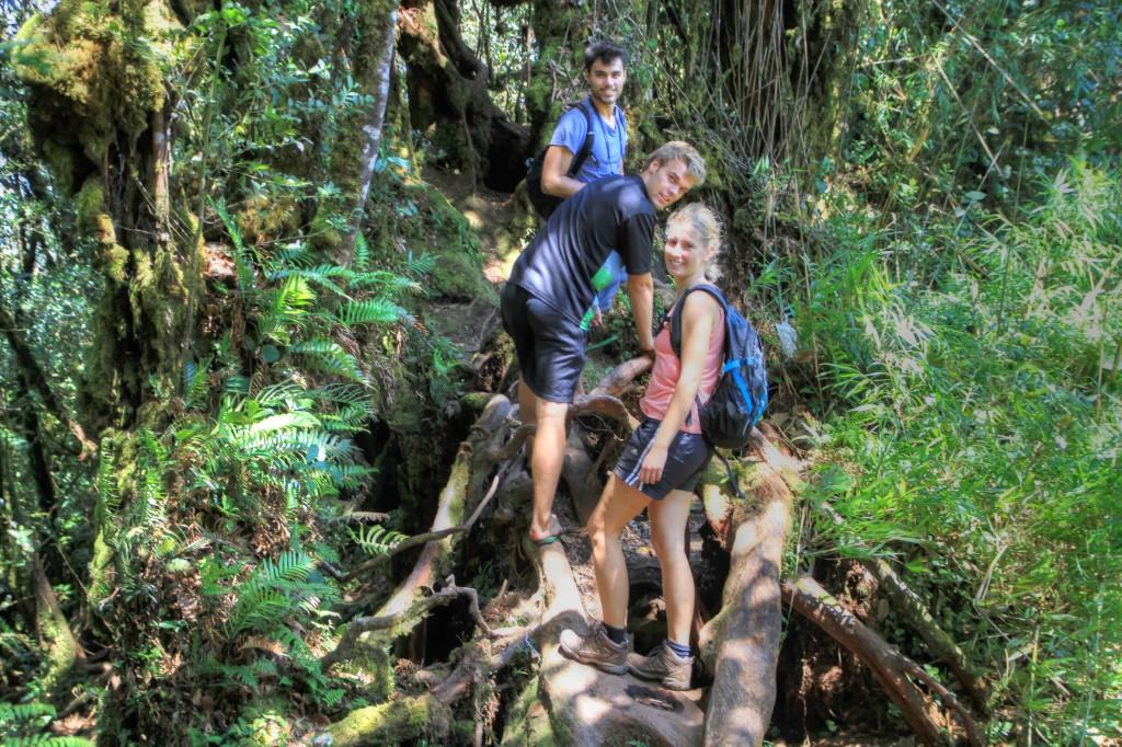 Caminhando pela Mossy Forest em Cameron Highlands