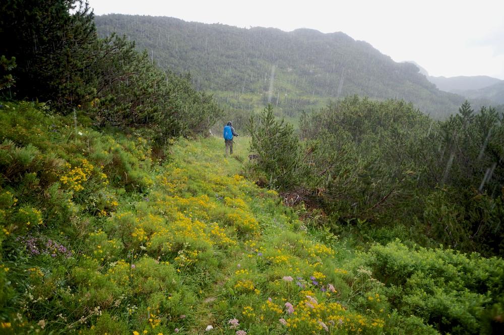 chuva no parque nacional de triglav nos alpes eslovenos