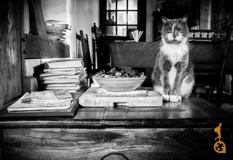 Foto Preto e Branco do gato francês dentro da casa na Normandia, França