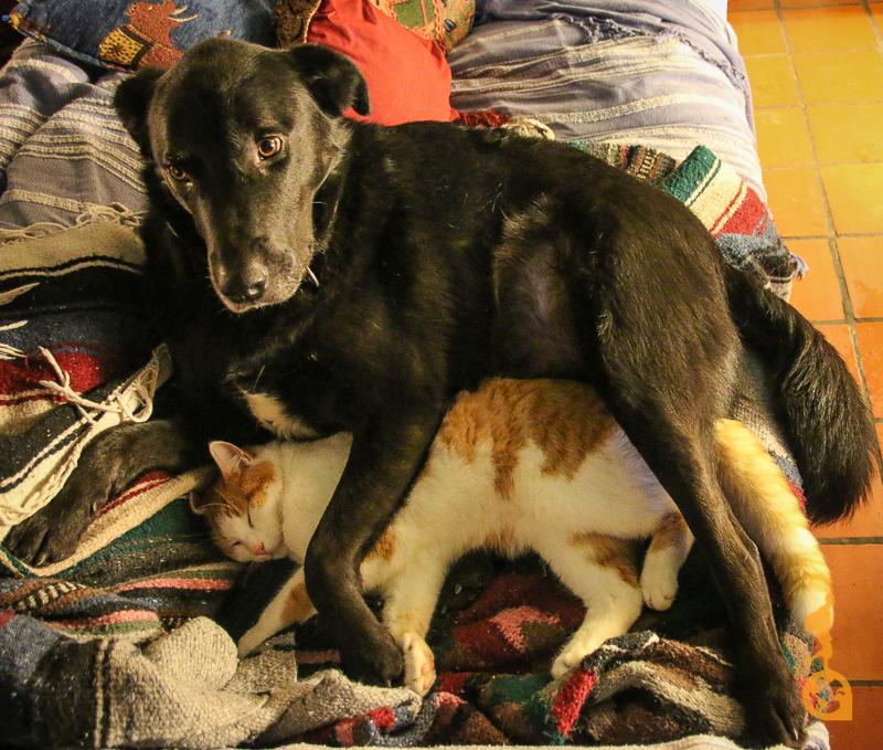cachorro dormindo de conchinha com um gato