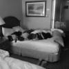 As crianças africanas na cama do hotel em Nova Iorque