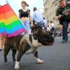cachorro gay