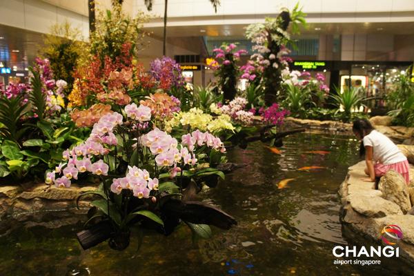 Jardim de Orquídeas