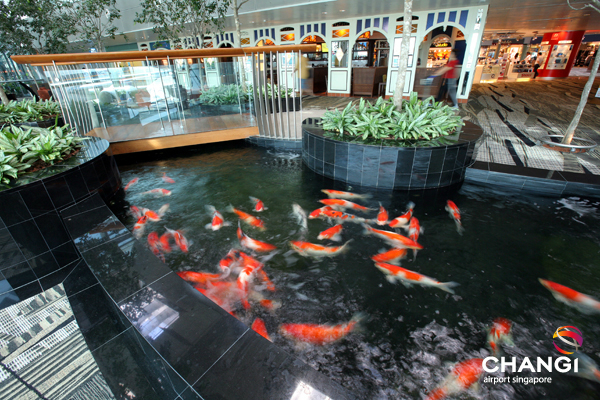 Lago com peixes japoneses dentro do aeroporto